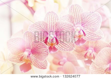 Beautiful purple orchid phalaenopsis orchid blurry background