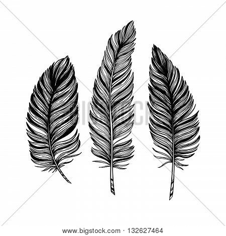 Hand drawn vector vintage illustration - Feathers. Ink and feather