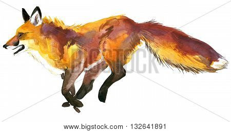 Fox. Fox hunting. Cute Fox. Watercolor Fox illustration.
