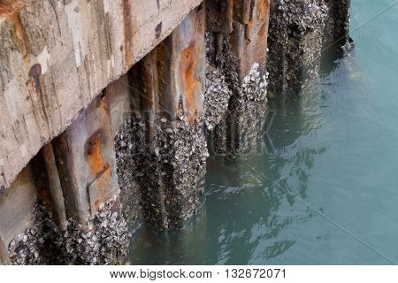 Oysters Growing On The Bottom Of A Concrete Construction