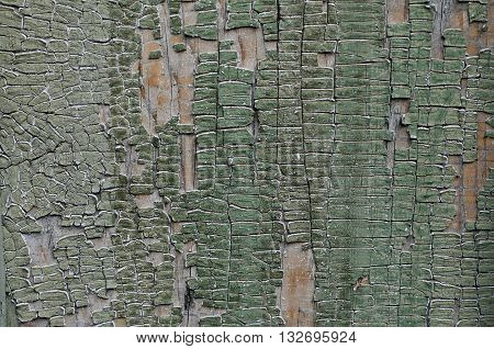 Painted vintage cracked wooden background green color