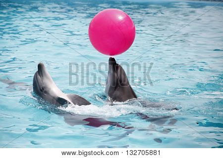 a cute dolphins during a speech at the dolphinarium