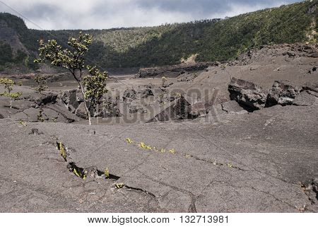 Surface of the Kilauea Iki Crater in Volcanoes National Park in Hawaii United States.