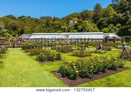 Wellington New Zealand - November 18 2014: The Lady Norwood rose garden in the Wellington Botanic Garden Wellington New Zealand.