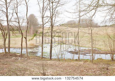 Small bog among the trees near the farmstead