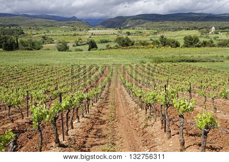 Corbieres Vineyard. The wines from the region tend to be just as varied as the terroir poster