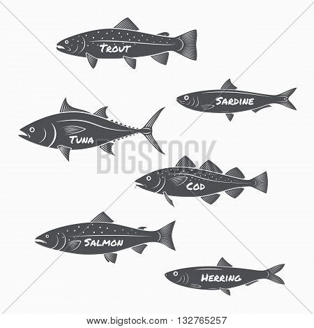 Set of fish silhouettes on white background. Trout sardine tuna cod salmon and herring labels.