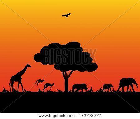 Africa elephant wildlife kangaroo giraffe rhinoceros evening time