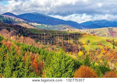 Pine Trees On Hillside In Autumn Mountains