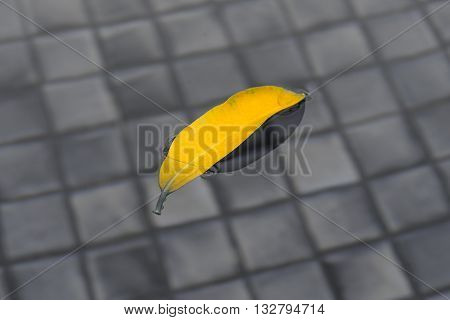 yellow leaf on the split toned water Concept for put something on the leaf