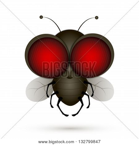 House fly insect and cartoon black fly insect. Insect hairy legs biology housefly.