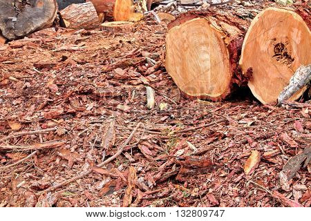 Landscape With Woodpile In The Summer From Sawn Old Big Pine And Spruce Logs For Forestry Industry