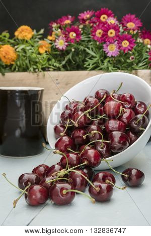 The scattered cherries in a white bowl, stand on a blue wooden table with juice in a clay jug, with flowers in a wooden box in beckground