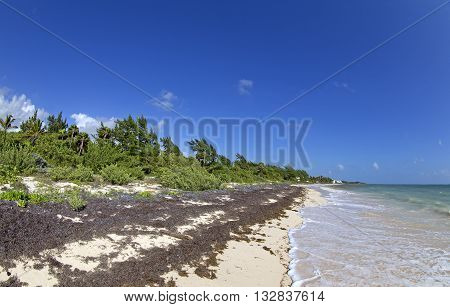 Pollution on a Caribbean tropical shore near Cancun, Mexico