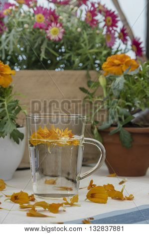 The infusion of the petals Tagetes in glass stands on a wooden table, on a linen tablecloth, flowers in the background