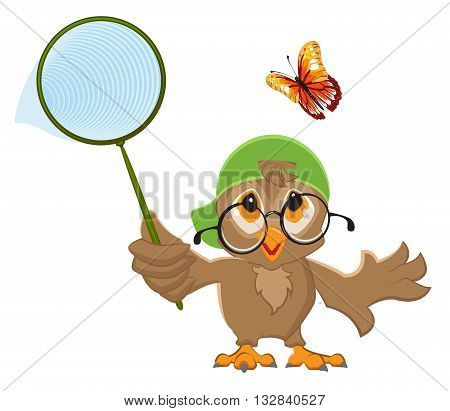 Owl Catches butterfly. Bird and butterfly net. Isolated on white vector illustration