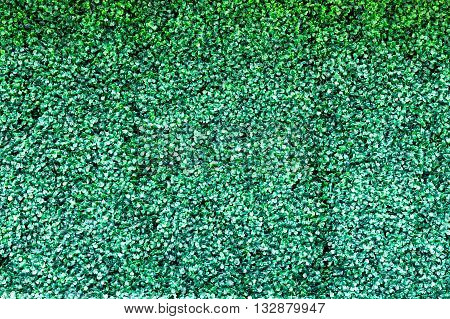 fake green leaf abstract used for background