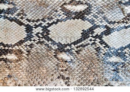 beautiful boa snake skin pattern texture background
