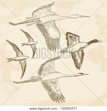 Flying birds flying stork swift duck vector collection