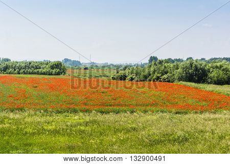 Farmland With Blooming Poppy.