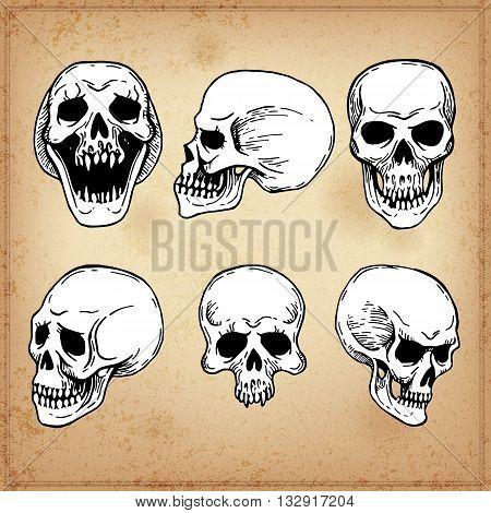 Human skull. Line art. Collection Of Hand Drawn Skulls. Ink Set
