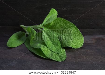 fresh sage leaves salvia officinalis on rustic dark wood closeup with selective focus