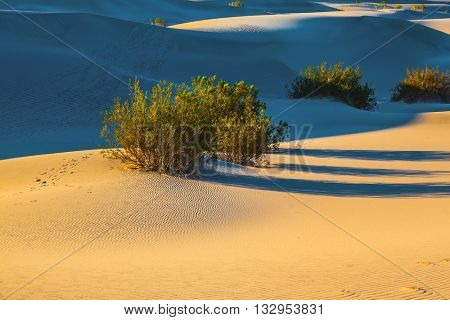 Early morning in Mesquite Flat Sand Dunes in California.  Smooth slopes of sand dunes. Long morning shadows from dry desert bushes