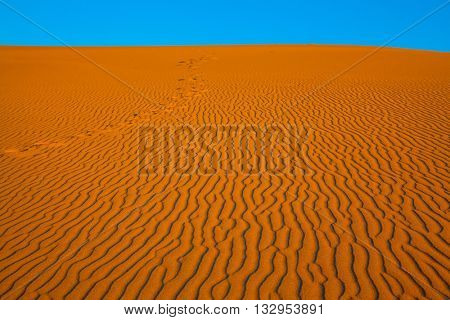 The small waves of orange sand. Early morning  in a picturesque part of Death Valley, USA. Mesquite Flat Sand Dunes