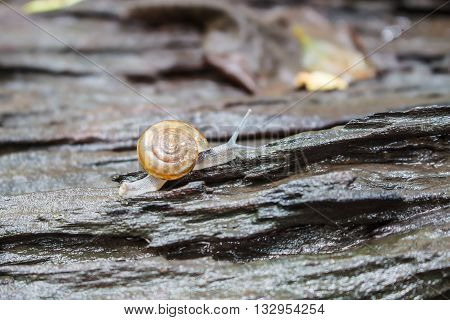 snail Catch the stump,snail,beautif ul snail,snail on the wood,sing