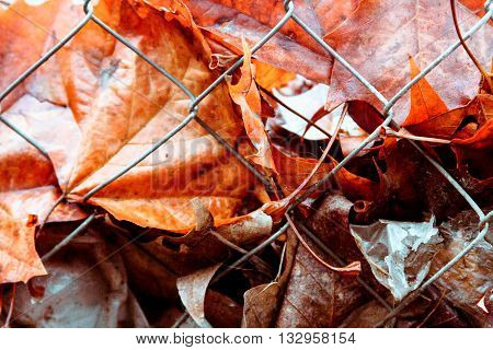Wet wilted leaves behind a woven wire fence with plastic after rain