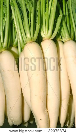 fresh radishes in market, The radish (Raphanus sativus) is an edible root vegetable of the Brassicaceae family that was domesticated in Europe in pre-Roman times