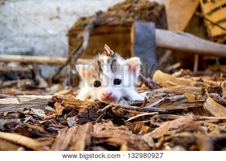Newborn cat cub kitten sneak and explore brown wooden ground