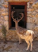 Curious tamed spotted deer (cervidae) looking inside a human house through the window poster