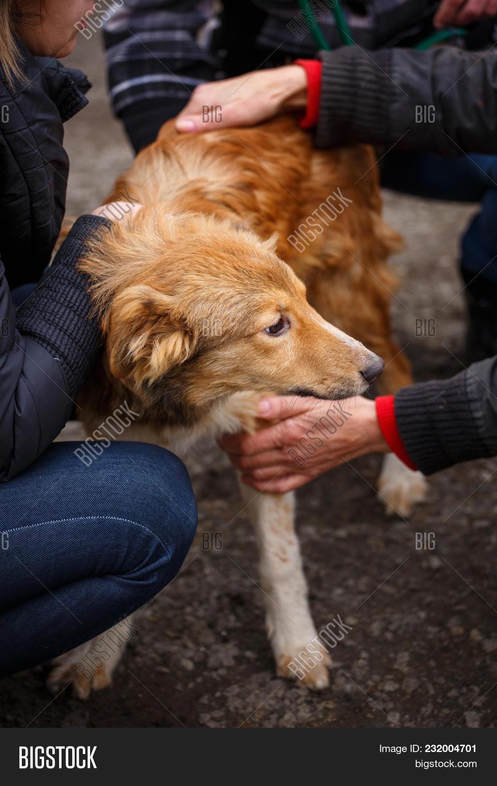 female veterinarian image & photo (free trial) | bigstock