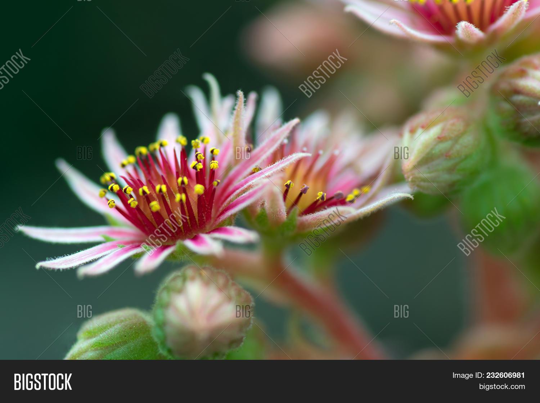 Close Pink Flowers Image Photo Free Trial Bigstock