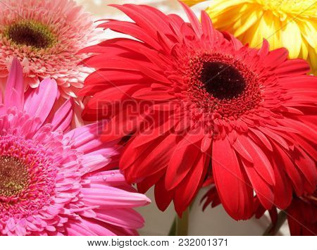 Red, pink and yellow gerbera flower bouquet