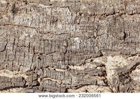 The Bark Of An Acacia Tree