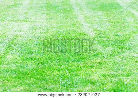 Lawn Of A Country House Neatly Cut With A Lawn Mower