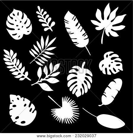 Palm Leaves Silhouettes Set Isolated On Black Background. Tropical Leaf Silhouette Elements Set Isol