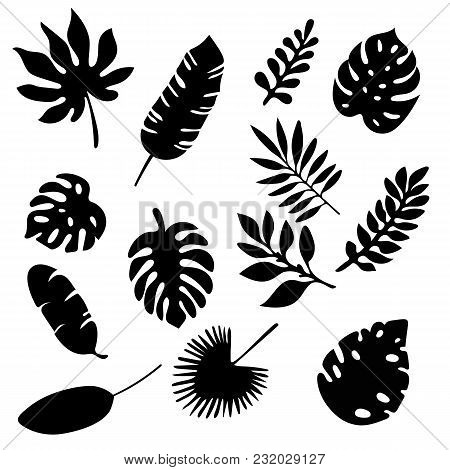 Palm Leaves Silhouettes Set Isolated On White Background. Tropical Leaf Silhouette Elements Set Isol