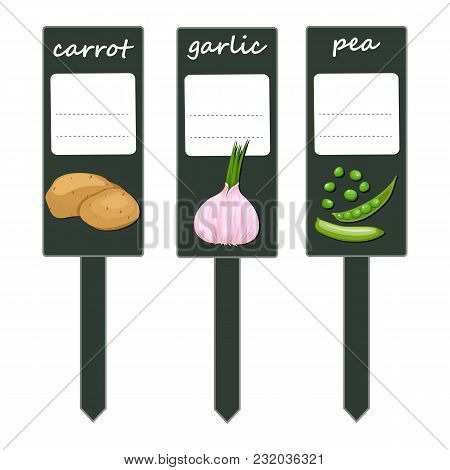 Organic Label With Green Vegetables .large Potatoes, Green Peas And Garlic Flavor. Set Of Labels For