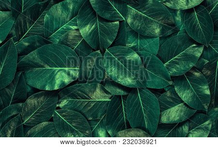 Green leaves background. Leaf texture. Nature concept
