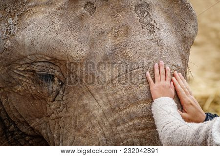 Long Shot Of Elephant Head With Child And Mom Hands