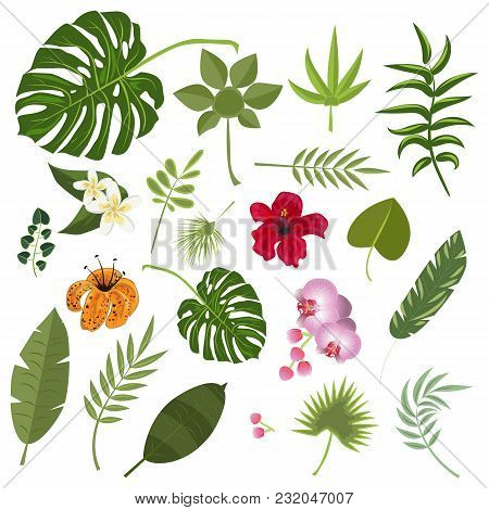 Tropical Leaves And Flowers. Set Isolated Palm And Flowers Exotic Leaf Plant Floral Hawaii Botany De