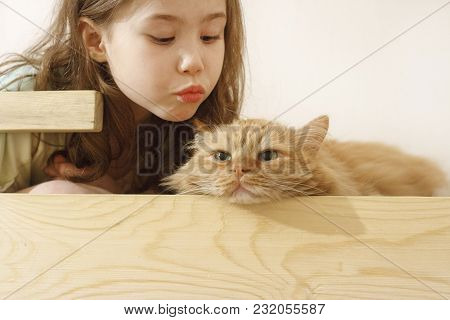 A Girl Communicates With Her Beloved Red Cat
