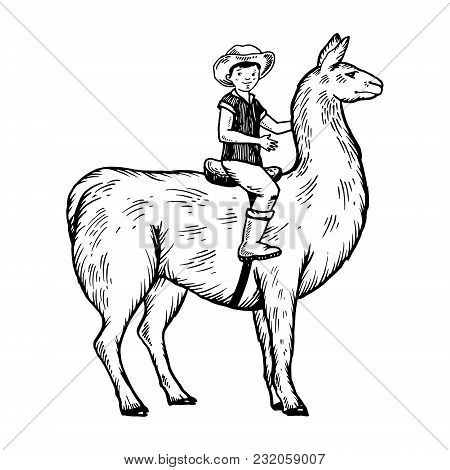 Child Boy Riding Llama Engraving Vector Illustration. Scratch Board Style Imitation. Black And White