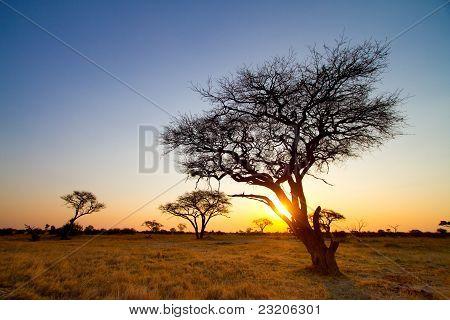 Afrikanischer Sonnenuntegang