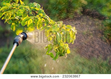 Spraying Trees With Pesticides