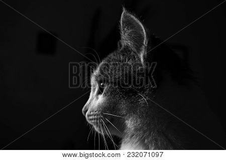Cat portrait on black background. Kitten portrait. Cat. Kitten. Grunge cat.