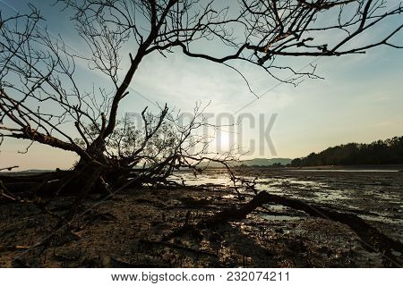 Dead Tree In The Tropical Sea Sunset Or Sunrise Evening Time